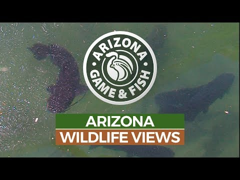 Episode 8 - 2018/2019 Arizona Wildlife Views Television