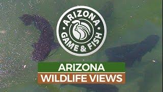 Episode 8 - 2018/2019 Arizona Wildlife Views Television