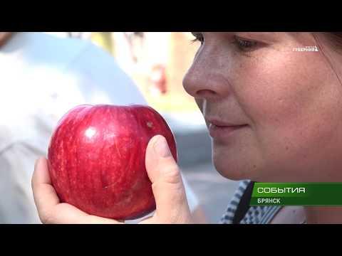 Закуска из яблок и сыра — рецепт с фото