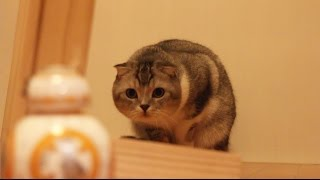 Кішки проти ВВ-8 / Зоряні війни сферо / 猫のいもたろう