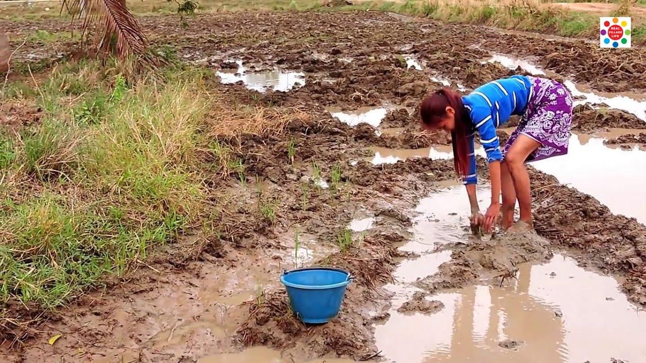 জল শুকিয়ে মাছ ধরা দেখুন – Hand Fishing frum Muddy Water   Real Village Life