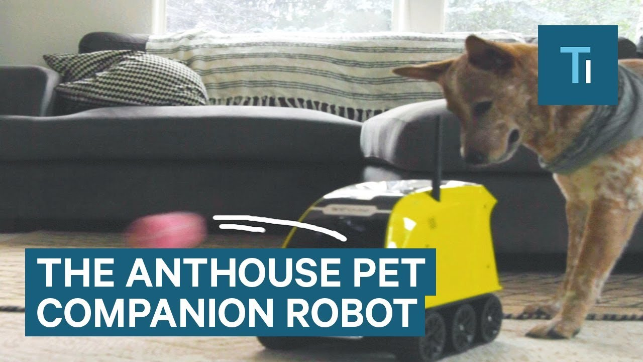 Robot Can Feed And Play With Your Dog While You're Out