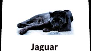 English Vocabulary   Animals