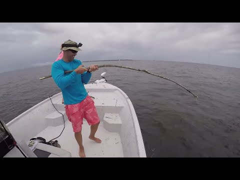CANE POLE Fishing -Catch And Cook: Spadefish!