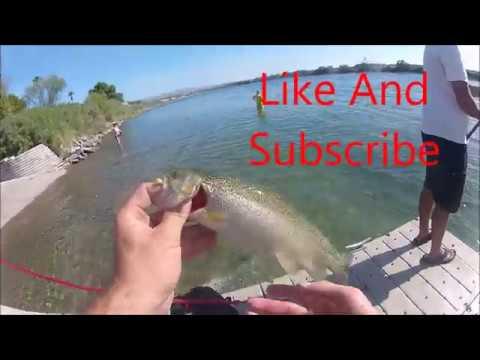 Bullhead AZ Trout Fishing