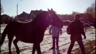 Rozpoczęły się największe targi końskie w Europie