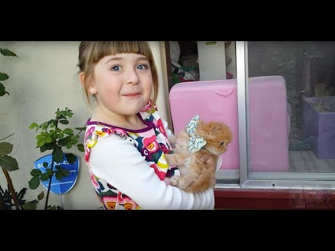 Thumbnail: Ellie's 6th Birthday - Kitten Surprise