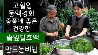 솔잎발효액, 솔순, 솔잎효능, 고혈압, 동맥경화, 중풍…