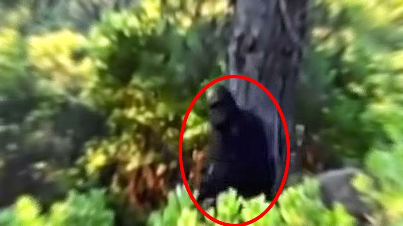 Man witnesses Bigfoot in great detail 2018 - RBE09