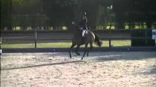 Roland `Sporthorses from Holland` FOR SALE  peter bulthuis