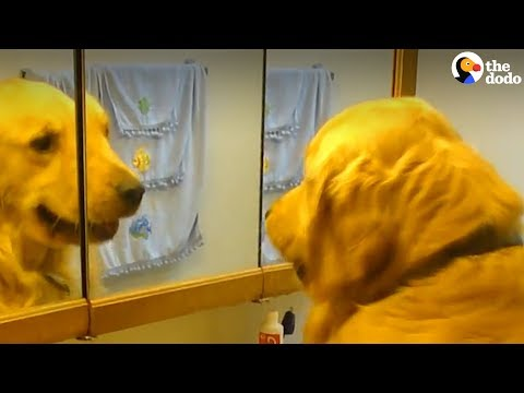 Smart Dog Turns On Sink All By Himself | The Dodo