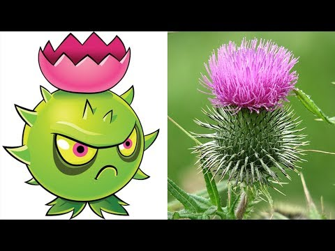 Plants Vs Zombies 2 Plants In Real Life!