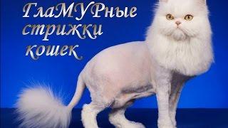 Гламурные стрижки кошек