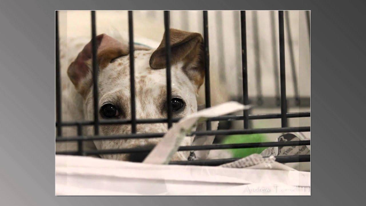 Homeless animals essay a definitional essay