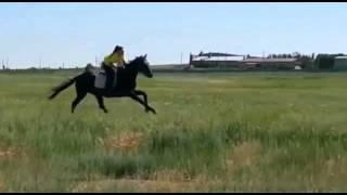 Девушки и лошади, наша работа