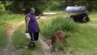 غزال صغير يضرب رجل سمين  مضحك جدا.