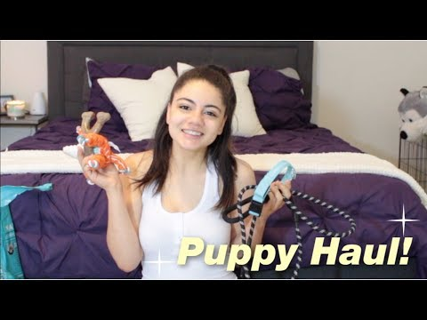 new-puppy-haul!-siberian-husky-puppy!-(ft.-coolpetlover,-chewy,-amazon,-and-more!)