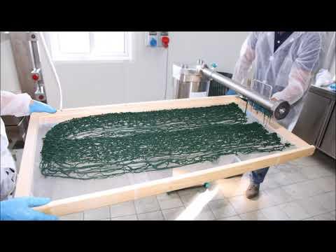 La produzione di Spirulina in Bertolini Farm!