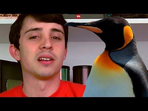 #GUIOSSRESPONDE - PINGUINS SÃO DEMAIS!