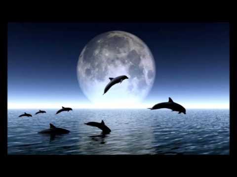 Sonidos de delfines   Música para dormir