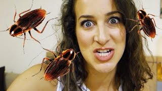 I POOPED OUT A BUG?! | Contiki Day 4
