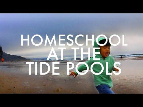 Tide Pooling on the Oregon Coast : RV Fulltime w/9 kids