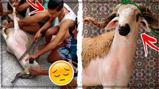 أجواء عيد الأضحى...أخيرا ذبحت خروف العيد🔪😰!!!