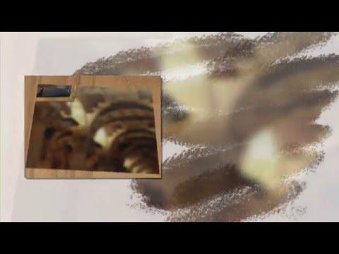 Август Рашиз YouTube · Длительность: 3 мин16 с