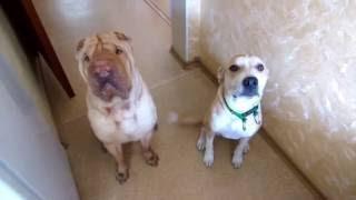 Как перевоспитать агрессивную и неуправляемую собаку?