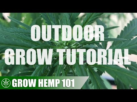 Outdoor Greenhouse Timelapse Grow Tutorial