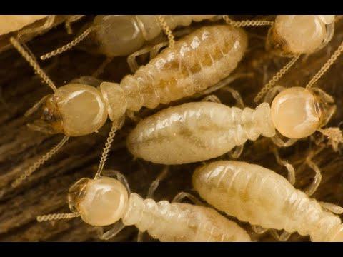 Termite Control Queen Creek AZ - 480-493-5028 | Ozone Pest Control