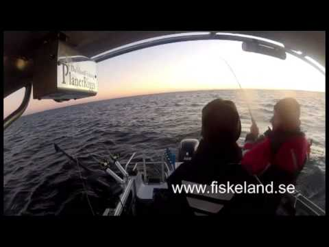 The Fiskeland area - One of the best areas for angling in Sweden and Norway.