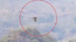 Dziwny film zChin może przedstawiać lecącego smoka