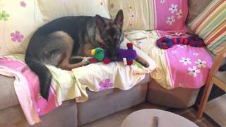 German Shepherd Puppy Marc New Toys