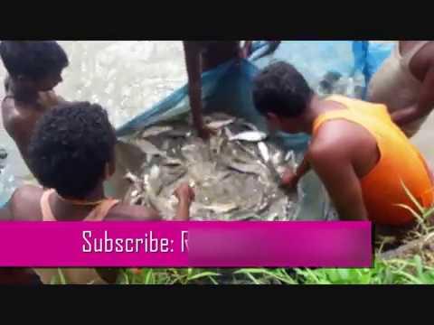 Professional fishers in Terai Nepal #हेर्नुस माछा कसरि मार्छन