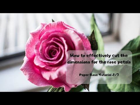 How to effectively cut the rectangular dimensions for the rose petals: Paper Rose tutorial 2/7