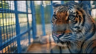 Aleppo zoo animals wait to be re-homed from Turkey rescue centre