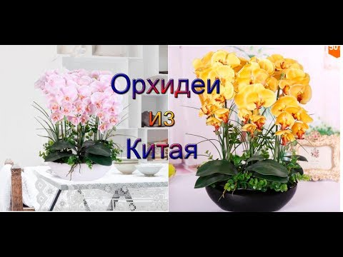 Семена Орхидеи из Китая распаковка и посадка семян Aliexpress