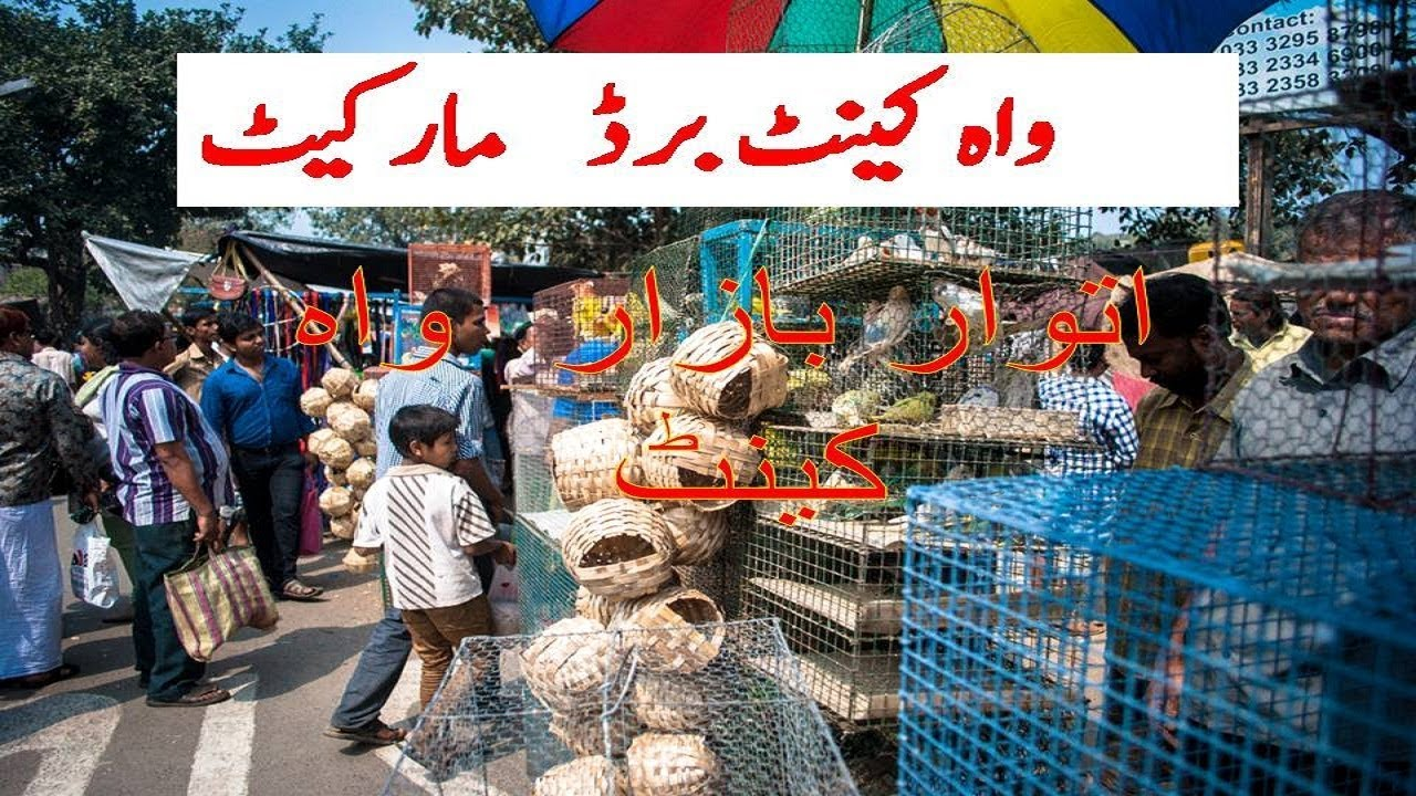 Birds Bazaar Wah Cantt Itwar Bazar Wah cantt birds for sale in Wah