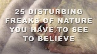 25 Disturbing Freaks Of Nature You Have To See To Believe
