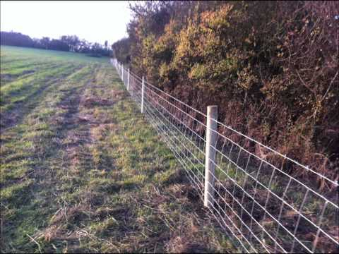 800 metres of sheep fencing
