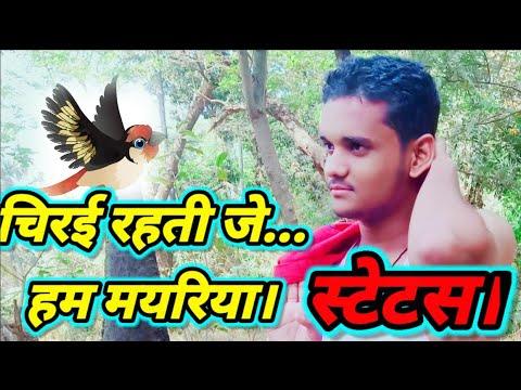 Chirai Rahti Je Hum Mayariya | Jay Yadav |