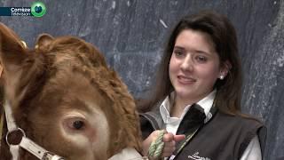 Concours Général Agricole de la Race Limousine