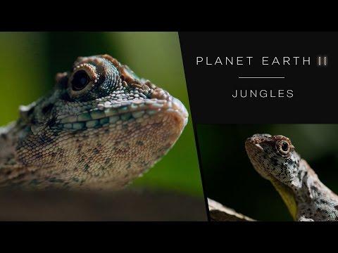 Draco lizard soars like a dragon - Planet Earth II: Jungles - BBC One