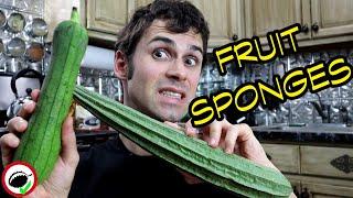 LUFFA : The Natural Sponge You Can EAT - Weird Fruit Explorer Ep 355