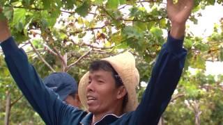 CLIP HANH TRINH DU AN SANG TAO KHOI NGHIEP 2016