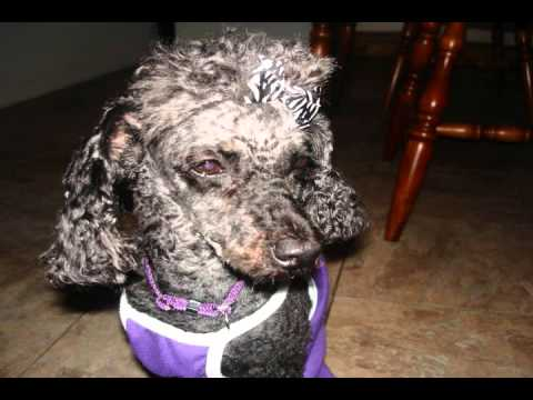 Dogs with Addisons Disease