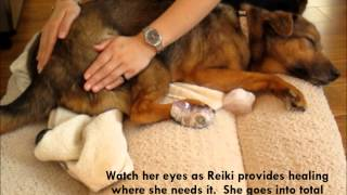 Preview:  Reiki Healing For Dogs