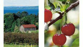 Cherry Juice U Pick Cherries