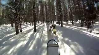 Explore Colorado Snow Caps Sled Dogs